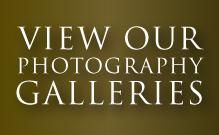 Photography Galleries Typography Image